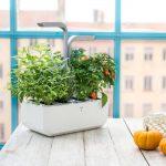 Indoor Planter Smart Garden By Veritable